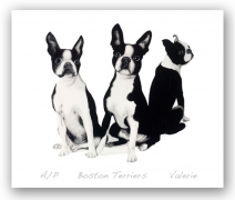 bostonterriers